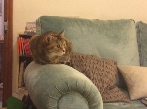 Image of cat on arm of sofa